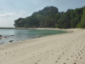 Neil's Cove