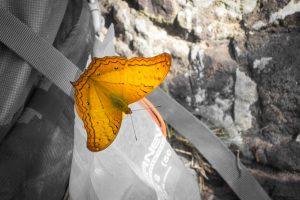 Vole, petit papillon