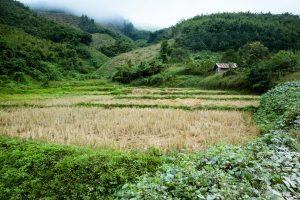Le Laos, c'est vert (comment ça nous l'avons déjà dit ?)