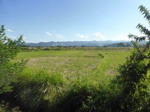 Le vert laotien
