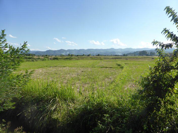Champ près de Luang Namtha (le Laos, c'est vert !)