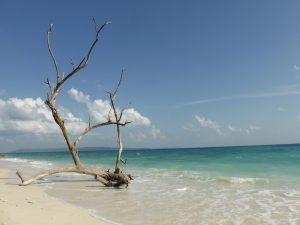 Beach #5