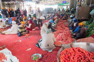 Atelier découpe de carottes
