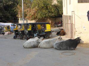 Les vaches et les tuk-tuk (l'Inde, quoi)
