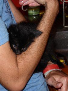 Le tout petit chat trop mignon de l'auberge