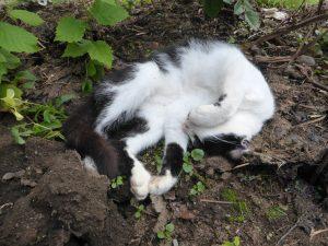 Le chat le moins sauvage du monde