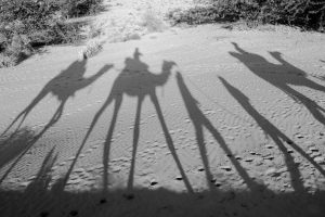 Camel's shadows
