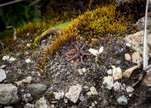 Une araignée se prenant pour une fleur
