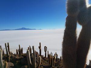 L'île aux Cactus
