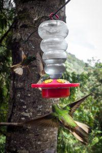 Un colibri attrapé en vol