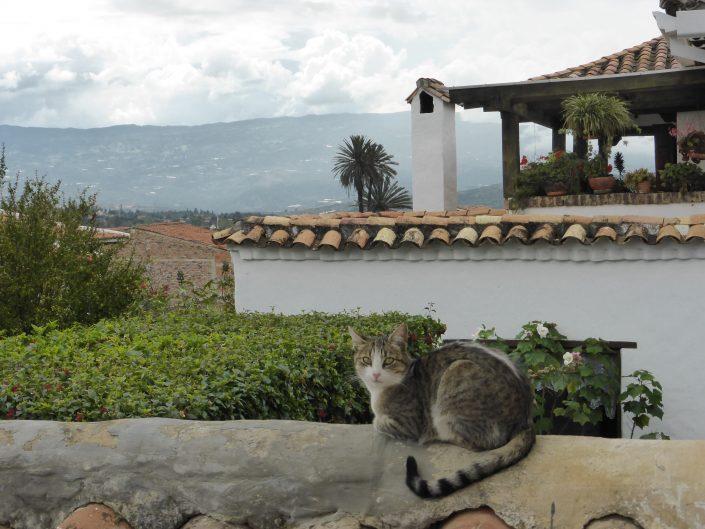 Le chat de la maison